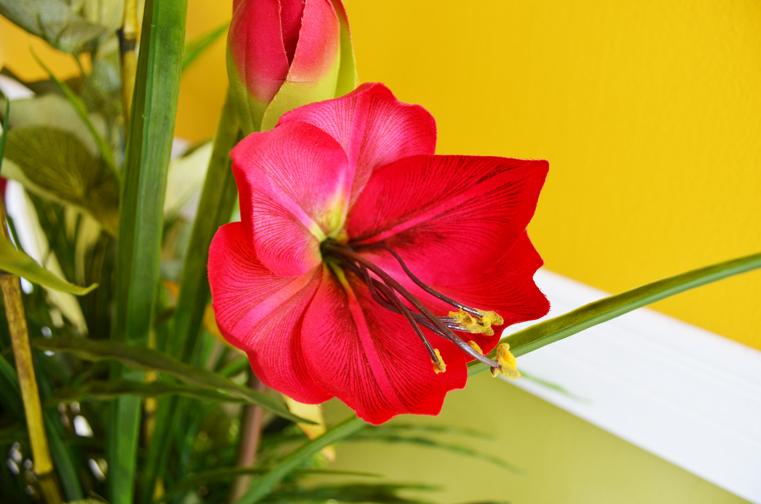 red-arrangement